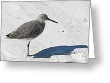 Gray Sandpiper On White Beach Greeting Card