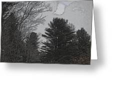 Gray Skies Over The Pines Greeting Card