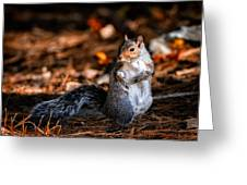 Gray Squirrel Dance Greeting Card
