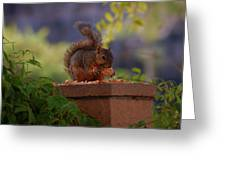Munching Squirrel Greeting Card