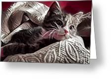 Gray Tabby With White Quilted Throw Greeting Card