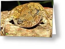 Gray Tree Frog Horizontal Greeting Card