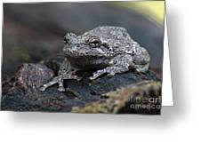 Gray Treefrog On A Log Greeting Card