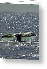 Gray Whale Greeting Card