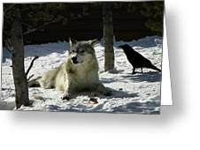 Gray Wolf 4 Greeting Card