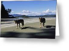Gray Wolves On Beach Greeting Card