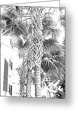 Grayscale Palm Trees Pen And Ink Greeting Card
