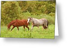 Grazin' In The Grass Greeting Card