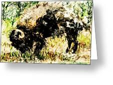 Grazing Bison Greeting Card