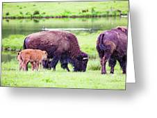 Grazing Bisons Greeting Card