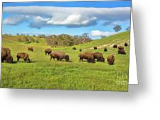 Grazing Buffalo Greeting Card