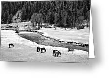 Grazing Bw Greeting Card