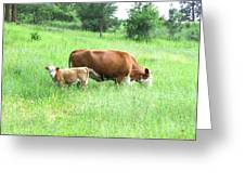 Grazing Cow And Calf Greeting Card