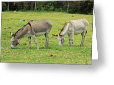 Grazing Donkeys Greeting Card