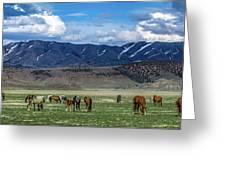 Grazing Herd Greeting Card