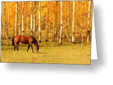 Grazing Horse In The Autumn Pasture Greeting Card