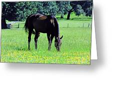 Grazing Horse In The Flowers Greeting Card