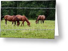 Grazing Horses - Cades Cove - Great Smoky Mountains Tennessee Greeting Card
