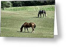 Grazing Horses Greeting Card by John Greim