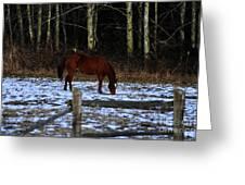 Grazing In A Washington Winter Greeting Card