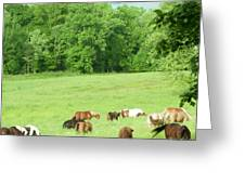 Grazing In The Morning Greeting Card
