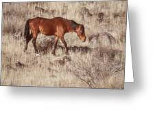 Grazing In The Winter Grass Greeting Card