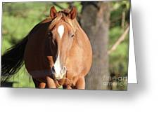 Grazing Mare  Greeting Card