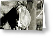 Grazing Mare - Southern Indiana Greeting Card