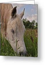 Grazing Greeting Card