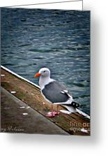 Grazing On The Dock Greeting Card