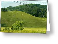 Grazing On The Mountain Side Greeting Card