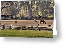 Grazing Ponies Greeting Card