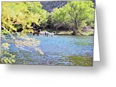 Grazing Salt River Horses Greeting Card