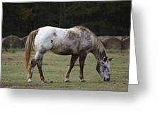 Grazing Time Greeting Card