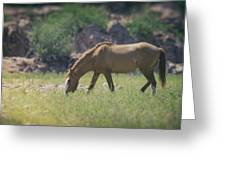 Grazing Wild Mustang  Greeting Card