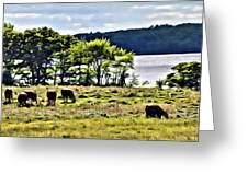 Grazing With A View Greeting Card