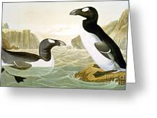 Great Auk (alka Impennis): Greeting Card