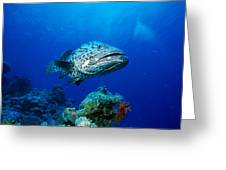 Great Barrier Reef Greeting Card by Peter Stone - Printscapes