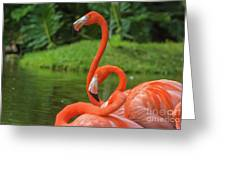 Great Birds Greeting Card