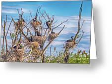 Great Black Cormorants Colony - Danube Delta Greeting Card
