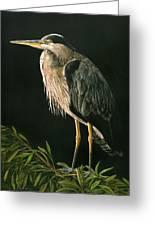 Great Blu Heron Greeting Card
