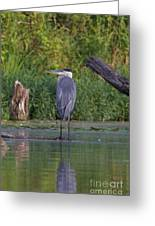 Great Blue 3 Greeting Card