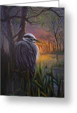 Great Blue At Sunset Greeting Card