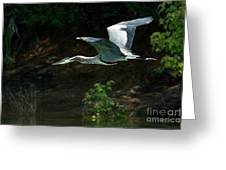 Great Blue Fly-by II Greeting Card