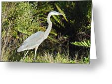 Great Blue Heron #2 Greeting Card
