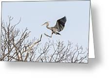 Great Blue Heron 2014-4 Greeting Card