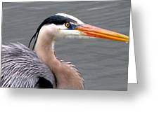 Great Blue Heron 5 Greeting Card