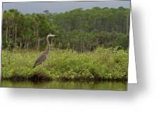 Great Blue Heron Along Cedar Creek Greeting Card