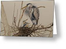 Great Blue Heron And Chicks Greeting Card