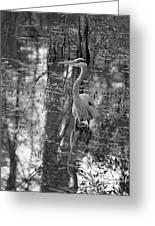 Great Blue Heron And Reflection-black And White Greeting Card